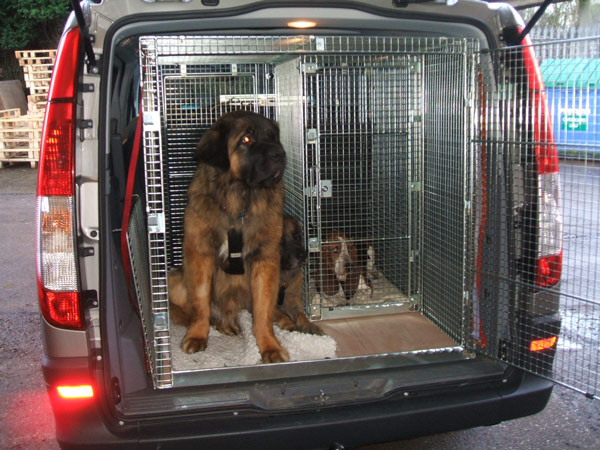 Custom Made Dog Cages For Vans